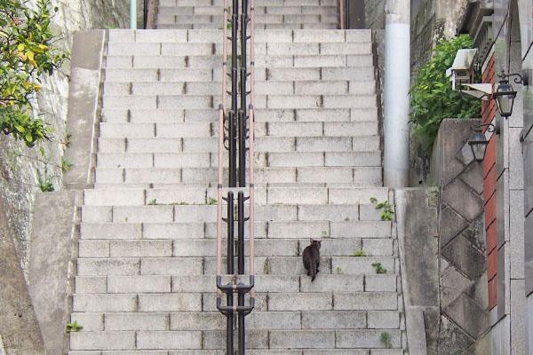 階段の途中のキジトラ君
