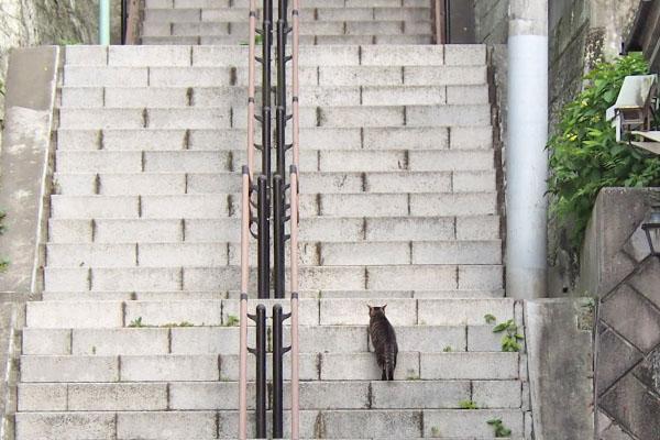 きじとら君 階段を進んでゆく