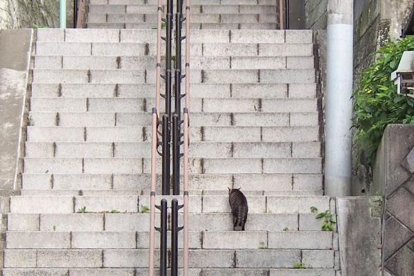 きじとら君 階段 意外とゆっくり