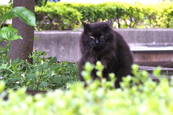 mofune watching me