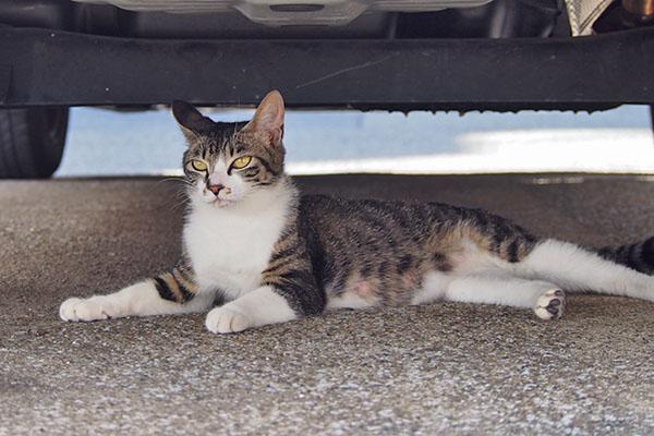 リンクス ずっと仔猫の居る所を見ている