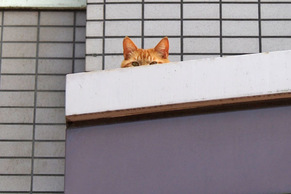 giza peeping