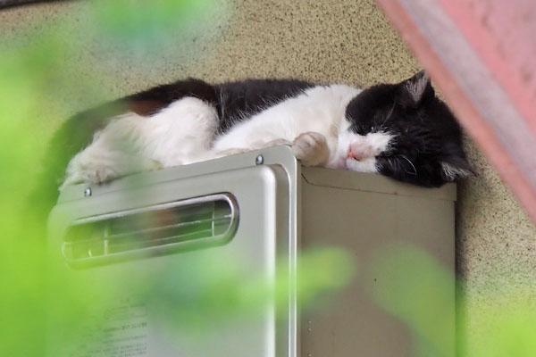 sleeping nicole