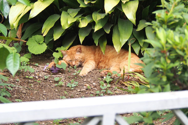 lucus takes a nap