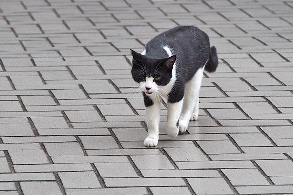 chomo walking