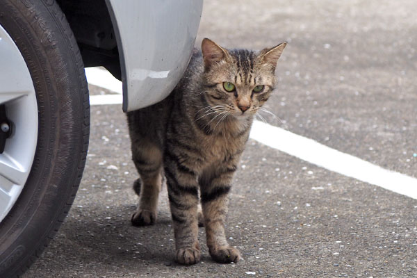 shimawo watching other cats