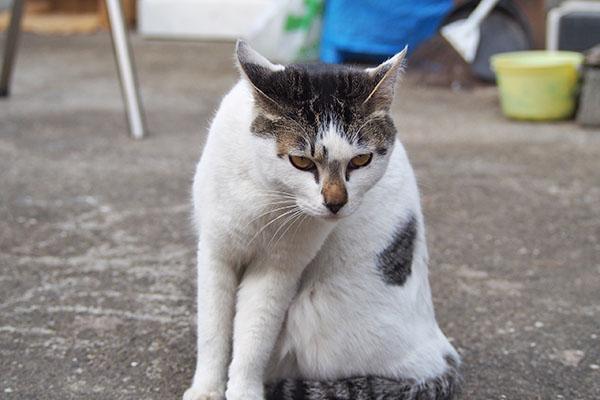 shiromaru sitting