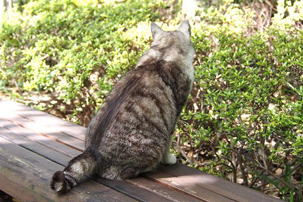 ベンチの上に座るクロム