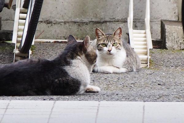 sakura and ombre
