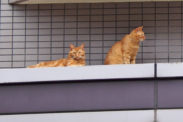 ginger brothers