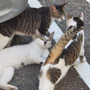 soraplace_3cats