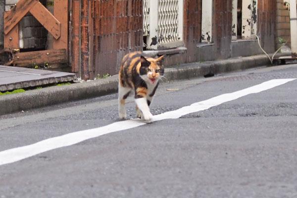 リコ 走って来る