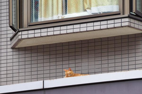 近くにつぶ 上に猫さんの足