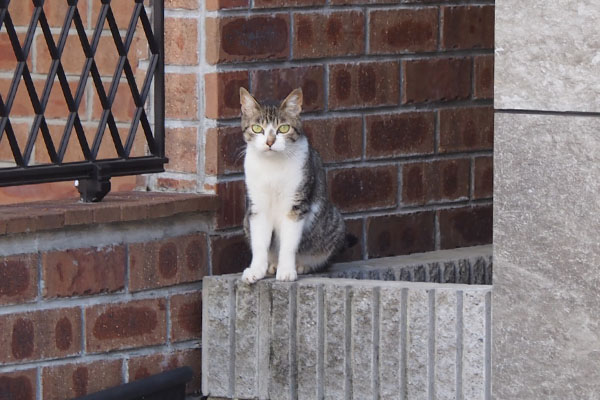 sakura watching me