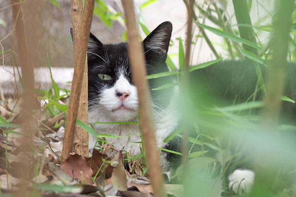 pochi sitting on the leaves