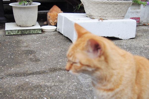 ソラちゃんと仔猫2