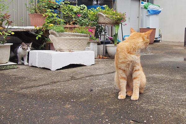 ソラちゃんとキジ白仔猫