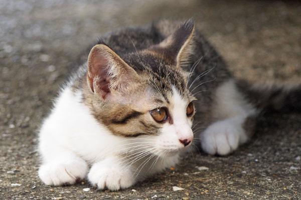 リン 他の猫を見てるアップ