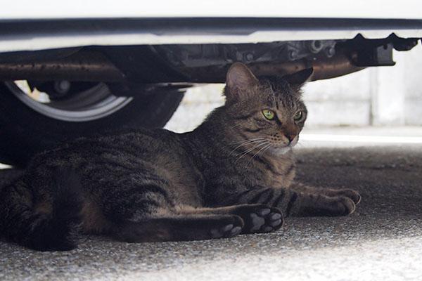 シマヲ 車の下