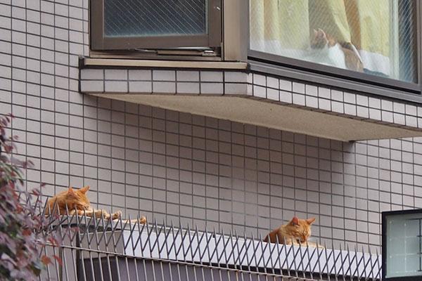 外猫と茶白君