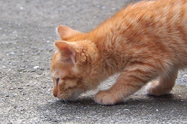 ginger kitten sniff