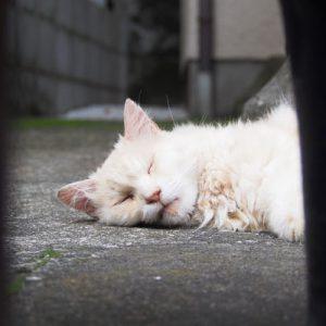 narikoma take a nap