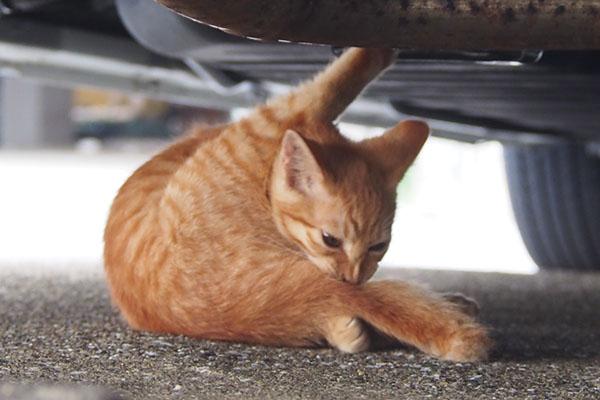 茶トラ仔猫君 車の下