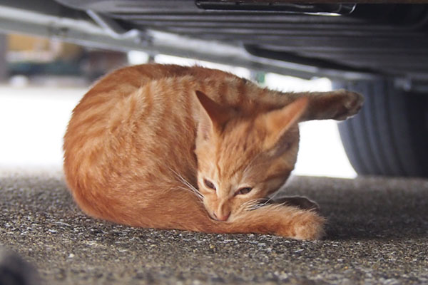 茶トラ仔猫君 車の下2